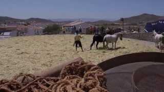 preview picture of video 'Trilla 2013 Uleila del Campo'