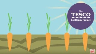 Crunchy Carrots: From Farm To Fork