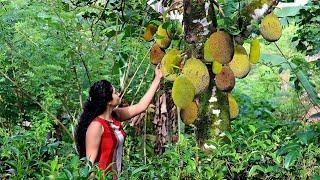 The amazing story of jackfruit |part (1)[ගැමිළිය සහ හෙරලිය(1කොටස)]| Poorna - The nature girl |