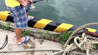 小アジ釣りは楽しいよ!島根県恵曇港