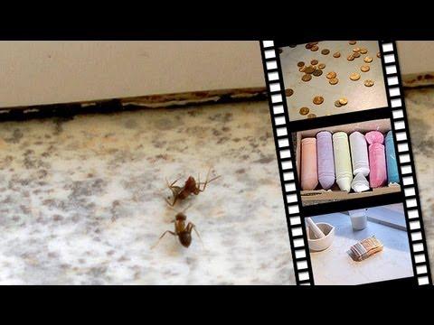 Die Top-3-Hausmittel gegen Ameisenplage
