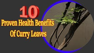 10 Proven Health Benefits Of Curry Leaves   Useful info