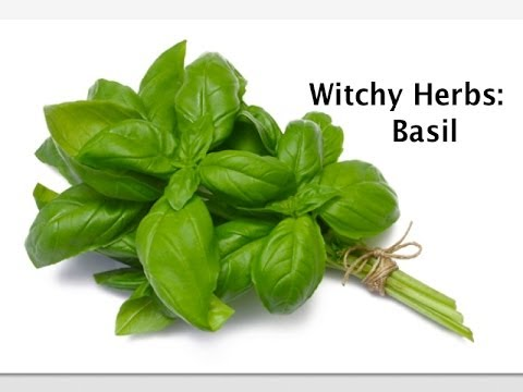 Video Witchy Herbs: Basil