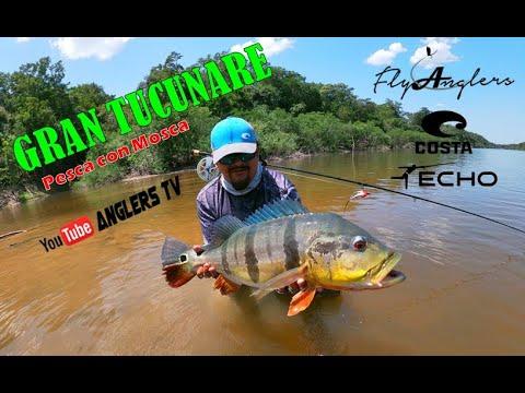 EL GRAN TUCUNARE/Peacock Bass, Haciendo Honor a una Mosca