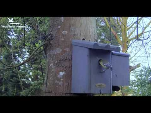 Checking Inside Nest Box - 26.03.2017