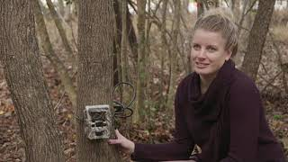 Wildlife cameras show more mammals than we thought | UNC-TV