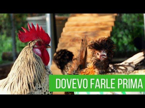 5 modifiche che devi fare assolutamente a un pollaio | Orto e giardino