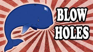 Whales Don't Spray Water Out of Their Blowholes and Other Interesting Whale Facts