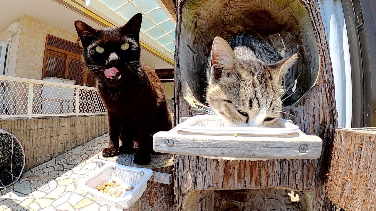 猫の集合住宅を訪問したら食事の時間だった