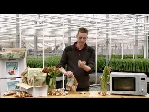Tulipany z mikrofalówki