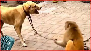 смешные животные и природа 3# (наш  bbs)