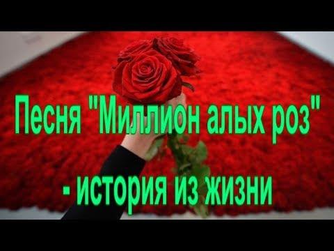"""Песня """"Миллион алых роз"""" -  история из жизни."""