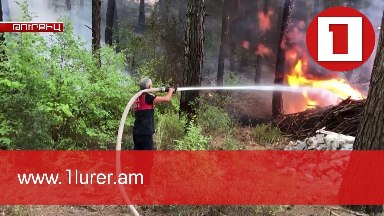 Эрдоган объявил пострадавшие от лесных пожаров регионы зоной бедствия