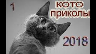 приколы с кошками 2018  #1 ржать здесь