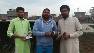 1st Position Peshawer Sy Gujranwala 350gps 2019 Punjab Racing Pigeons Club