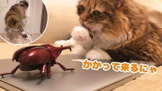 猫とリアルな動くカブトムシ戦わせたら猫パンチ炸裂w