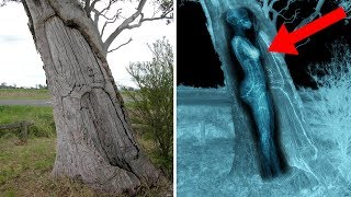 Most BIZARRE Recent Archaeological Discoveries!