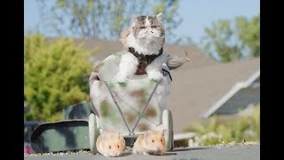 If Cats Ruled the World - Video Youtube