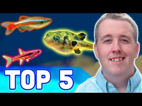 TOP 5 NANO AQUARIUM FISH