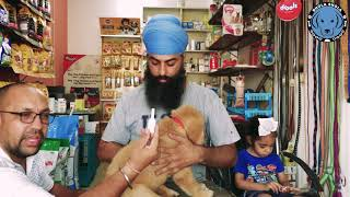 What is This Best Fleas, Flea Eggs, Ticks and Lice Medicine For Dogs and Puppies. BholaShola