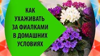 Почему большинство погибших на «Булгарии» женщины