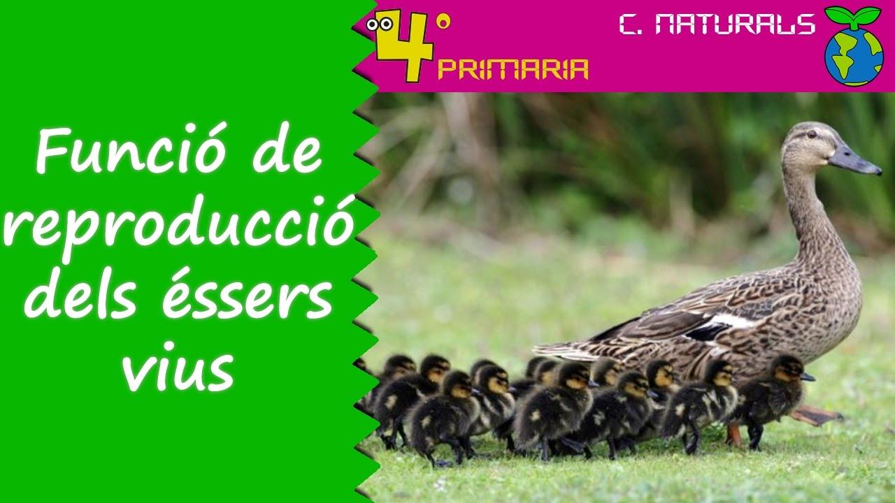Ciències de la Naturalesa. 4t Primària. Tema 4. Funció de reproducció en els éssers vius