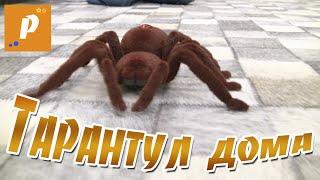 Паук тарантул у нас дома, распаковка игрушки на пульте управления Unboxing review spider tarantul