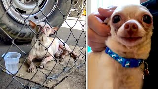 😿 15 Most Touching Animal Rescues 🐶