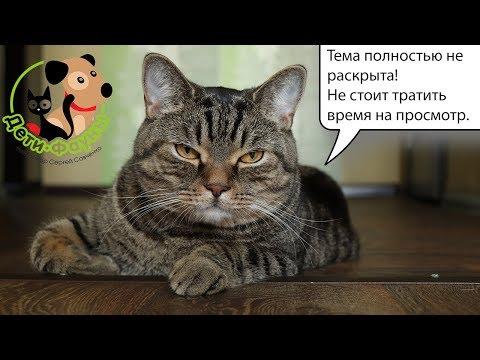 Вирусный лейкоз кошек (ВЛК) или лейкемия кошек