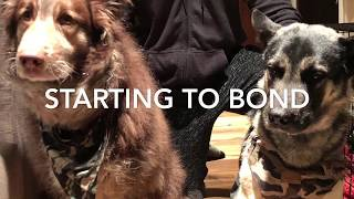 Fostering a Feral Dog