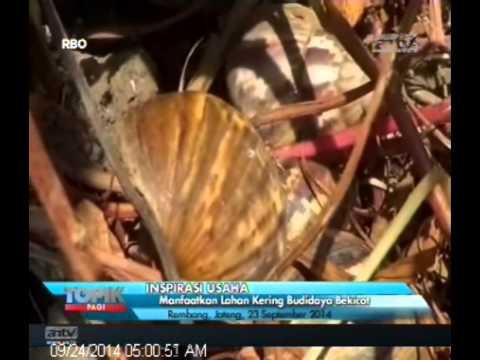 Video [ANTV] TOPIK Inspirasi Memanfaatkan Lahan Kering Budidaya Bekicot