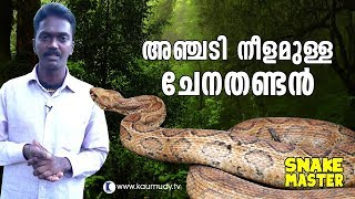 Wow! Vava Suresh rescues 5 feet long Russell's Viper | Snakemaster | Latest Episode