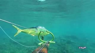 Podvodni Ribolov Lampuga