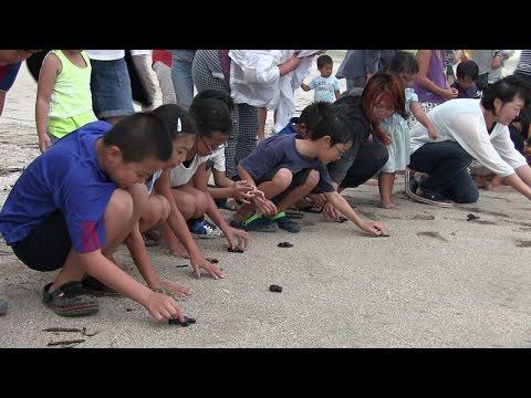 種子島の学校活動:西野小学校前之浜海岸でウミガメ放流体験