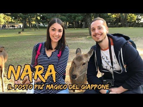 GIAPPONE giorno 8: NARA è il posto più magico che abbiamo visto!