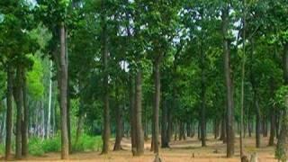 Sal tree forest, Shantiniketan