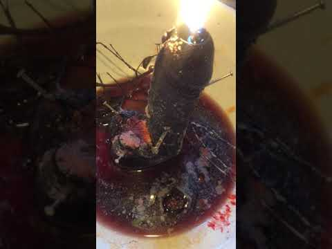 Download Voodoo Penis Spell, Sex Magic, Stop Penis To Work Spell, Haitian Vodou HD Mp4 3GP Video and MP3