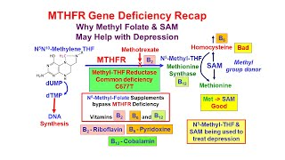 Methyl Folate Deficiency and Depression