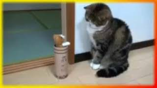 Смешное видео Приколы про животных Создай себе хорошее настроение