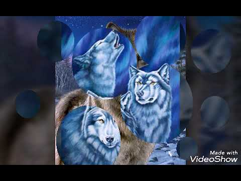 As sete melhores fotos de lobos ❤