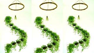 Spiral Hanging Garden With Coconut Shells/ Evergreen Turtle Vine/ Garden Idea By Botanical Woman.
