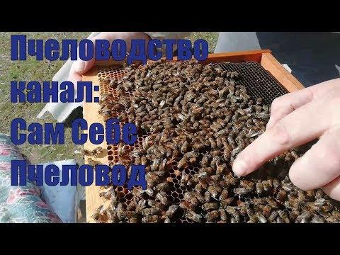 Пчеловодство 24,02,2019 осмотр пчел возвратные холода,расплод выходит
