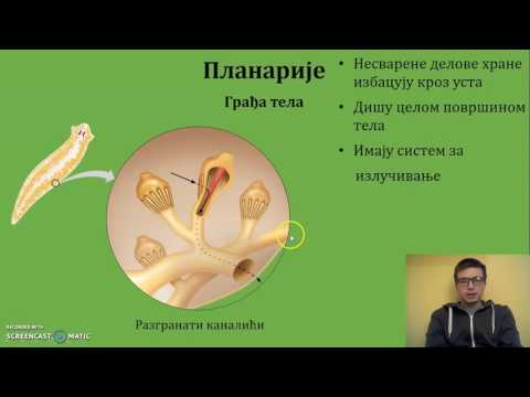 Endometrium rák szövettana