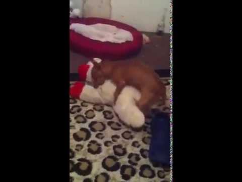 My dog Brooklyn sex video.
