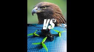 Hawk attacked my FPV drone! (HAWK vs APEX)