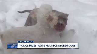Family searches for dog stolen from their yard----6pm