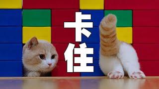 【喵來啦】你再給我說一遍貓是液體???