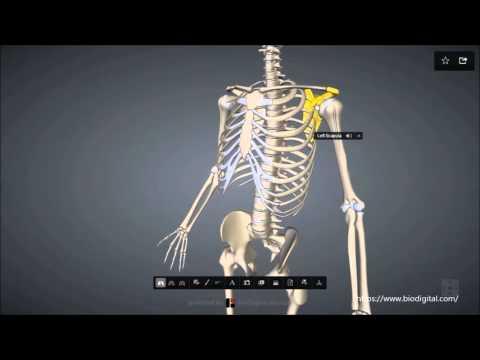 Der Schmerz im Rücken nach der Temperatur