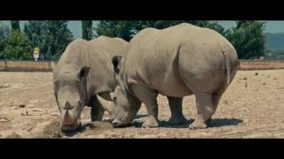 Смотреть онлайн Кадры диких животных в 4К