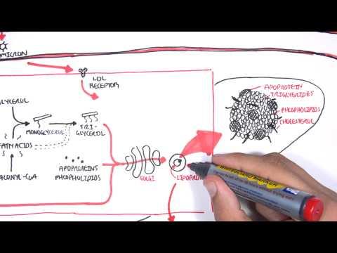 Helminthiasis tabletták oktatása